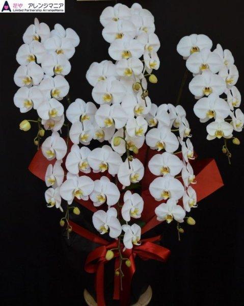 画像1: 胡蝶蘭 6本立ち 大輪白 県産品 予算40000円 (1)