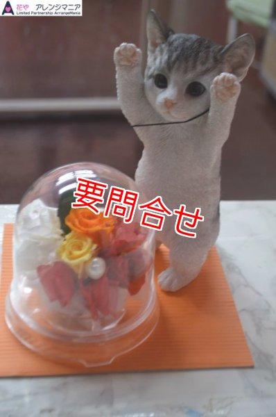 画像1: プリザーブドフラワー 猫たちボックス 【予算 8000円】 (1)